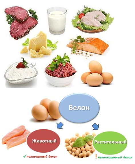 Белки в продуктах питания